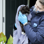 Join the Christmas Rescue Image RSPCA