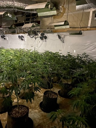 Cannabis factory at GB Image Bedfordshire Police